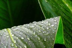 Zieleni raindrops i liście Zdjęcie Royalty Free