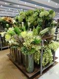 Zieleni rośliny dla wewnętrznej dekoraci lub kwiaty zdjęcia stock