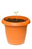 Zieleni saplings Zdjęcie Stock