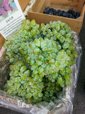 Zieleni stołowi winogrona Zdjęcia Stock