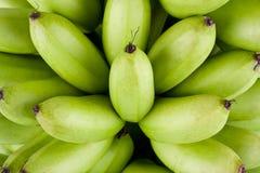Zieleni surowi Złoci banany na białego tła Pisang Mas zdrowym Bananowym owocowym jedzeniu odizolowywającym Obrazy Royalty Free
