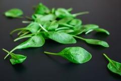 Zieleni szpinaków liście na czarnym tle Zdjęcia Royalty Free