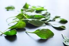 Zieleni szpinaków liście na szarym tle Zdjęcia Stock