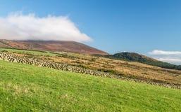 Zieleni trawiaści paśniki dla baraniego pasania w Północnym - Ireland obrazy stock