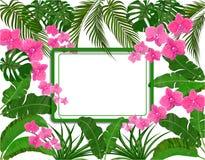 Zieleni tropikalni li?cie banan, koks, monstera i ogawa, R royalty ilustracja