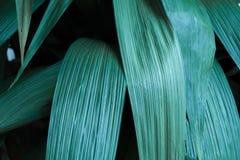 Zieleni tropikalni liście, liścia tło, natury pojęcie Obrazy Stock