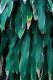 Zieleni tropikalni liście, liścia tło, natury pojęcie Zdjęcia Royalty Free
