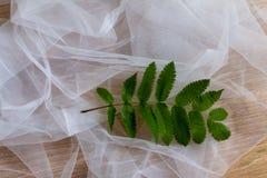 Zieleni tropikalni liście na białym tle Zdjęcie Royalty Free