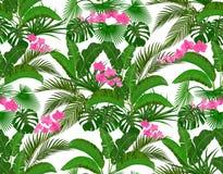 Zieleni tropikalni li?cie banan, koks, monstera i ogawa, R??owa orchidea ilustraci bezszwowy linowy royalty ilustracja
