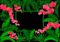 Zieleni tropikalni li?cie banan, koks, monstera i ogawa, R??owa orchidea Na czarnym tle ilustracja ilustracja wektor