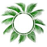 Zieleni tropikalni palma li?cie Miejsce dla reklamowa?, zawiadomienia ilustracja ilustracja wektor