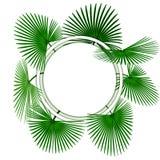Zieleni tropikalni palma li?cie W okr?gu reklamowego ?lepej billboardu znaku przestrzeni ilustracja royalty ilustracja