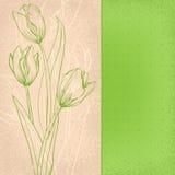 Zieleni tulipany Zdjęcia Royalty Free