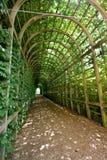 zieleni tunelowi winogrady Obraz Royalty Free
