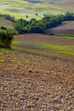 Zieleni Tuscany wzgórza Obrazy Royalty Free
