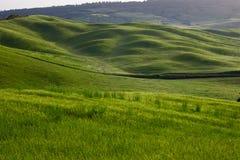 Zieleni Tuscany wzgórza Zdjęcia Stock