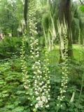 Zieleni w van Białe kwiaty Na tle ogrodzie Royalty-vrije Stock Foto