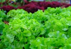 Zieleni świezi warzywa Zdjęcia Royalty Free