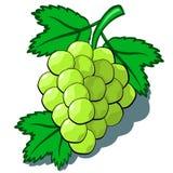 Zieleni winogrona obraz stock