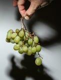 Zieleni winogrona Zdjęcia Royalty Free