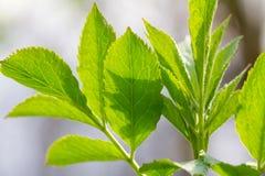 Zieleni wiosna liście i słońce promienie, selekcyjna ostrość Zdjęcia Stock