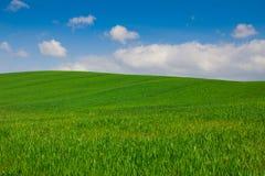 Zieleni wzgórza Val d'Orcia w Tuscany fotografia royalty free