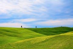 Zieleni wzgórza z żółtymi kwiatami Obraz Royalty Free