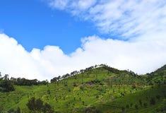 Zieleni wzgórza z Białymi chmurami w niebieskim niebie - Naturalny krajobraz w Munnar, Kerala, India obraz stock