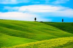 Zieleni wzgórza z kwiatami i drzewami Obraz Stock