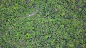 Zieleni Yilan Halni wzgórza z Luksusowym ulistnieniem w Tajwan Powietrzny odg?rny widok zbiory wideo