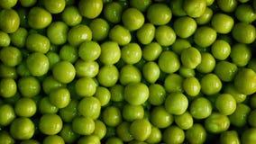 zieleni zbliżenie grochy zdjęcie wideo