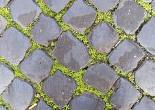 Zieleni ziemi pokrywa między popielatymi brukowymi kamieniami, Rzym Włochy Obraz Royalty Free
