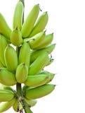 Zielenieje banany Obrazy Stock