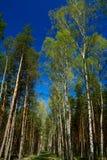 zielenieje drzewa Obraz Stock