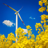 Zielenieje energię Fotografia Royalty Free