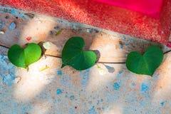 zielenieje kierowego liść Roślina liść w formie serca Obraz Royalty Free