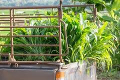 Zielenieje, kukurydzany liść, pickup, Chiang Mai, kraj wioski Obrazy Royalty Free
