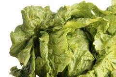 zielenieje liść sałaty obrazy stock