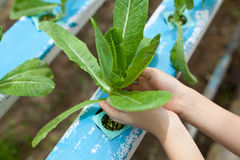 zielenieje małego warzywa Fotografia Royalty Free