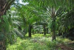 Zielenieje palmy zdjęcie stock