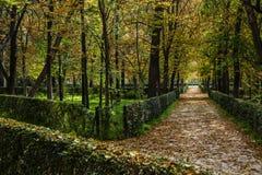 Zielenieje pomarańczowego las Retiro park w Madrid (Spain) Zdjęcie Stock