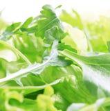 zielenieje sałatki Fotografia Stock