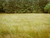 Zielenieje stonowanego forrest i łąkowego prostego natury tło Zdjęcie Stock