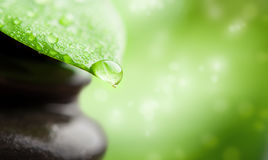 Zielenieje tło zdrój. leaf i nawadnia kroplę Obrazy Royalty Free