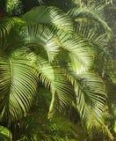 zielenieje tropikalnego Obrazy Stock