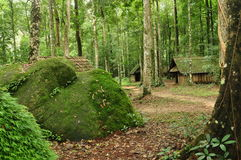 Zielenisty las w padać sezon Obraz Royalty Free