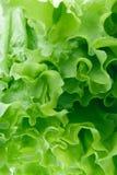 zieloną sałatkę Obraz Royalty Free