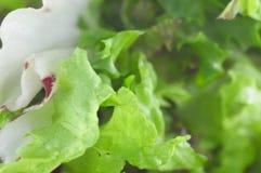 zieloną sałatkę Fotografia Stock