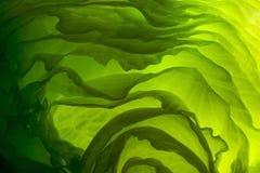 zieloną sałatkę Fotografia Royalty Free