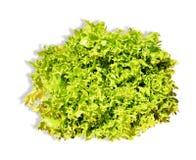 zieloną sałatkę Zdjęcia Royalty Free
